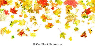 padające listowie