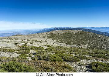 Padded brushwood (Cytisus oromediterraneus and Juniperus...