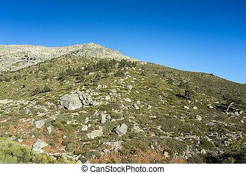 Padded brushwood (Juniperus communis subsp. alpina and Cytisus oromediterraneus) in the municipality of Rascafria, next to de Penalara Lagoon, in Guadarrama Mountains National Park, province of Madrid, Spain