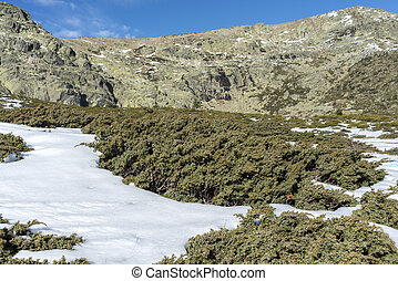 Padded brushwood (Juniperus communis subsp. alpina) in the municipality of Rascafria, next to de Penalara Lagoon, in Guadarrama Mountains National Park, province of Madrid, Spain