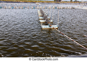Paddle wheel aerator in Shrimp farming closed system....