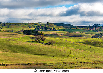 paddock, outback, landbouw