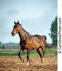 paddock, paarde