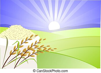 Paddy and rice	 - Illustration of paddy and rice