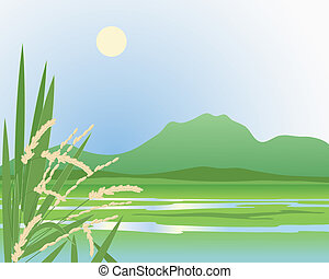 paddy field background - an illustration of a beautiful ...