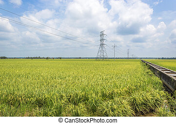 Paddy field with electricity high voltage power post and...