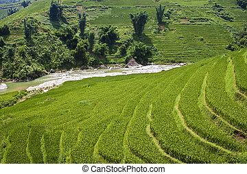 Paddy fields in northern Vietnam