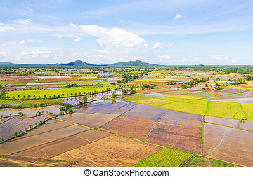 Paddy fields in the Philippines. Mountain landscape with green hills and farmland.