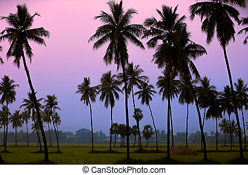 Paddy fields landscape in morning time Andhra pradesh ,India