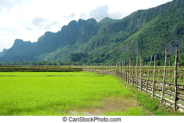 Paddy in countryside of Thailand