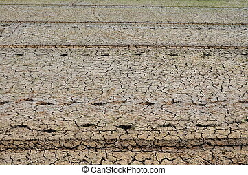 paddy in dry season