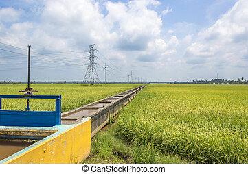 Paddy irrigation
