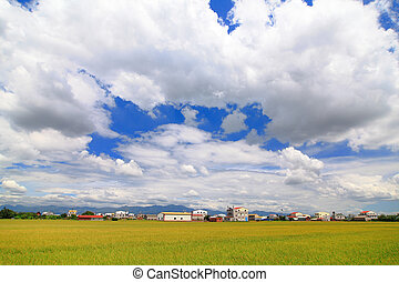 paddy rice field with blue sky and white cloud