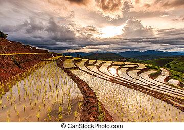 Paddy - rice fields at pa pong peang chiang mai asia...