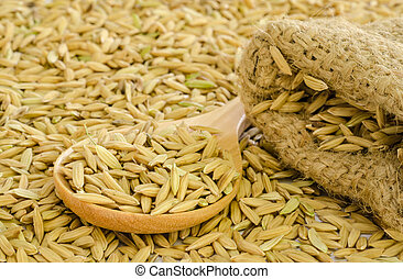 paddy rice seed. - paddy rice seed in a Burlap sack.