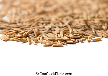 paddy seed on white background