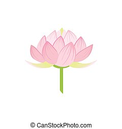 Padma Lotus Sacred Indian Flower