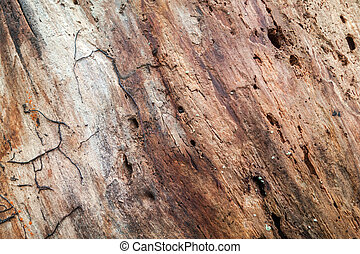 padrão, podre, árvore velha, tronco