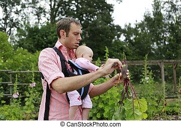 padre, y, bebé con, honda del bebé, portador, tirón, el, remolachas