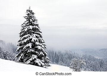 paesaggio., albero inverno, neve, foresta, nebbioso, abete...
