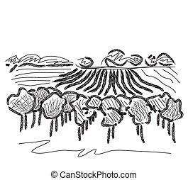 paesaggio, campi