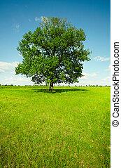 paesaggio, -, campo, con, quercia