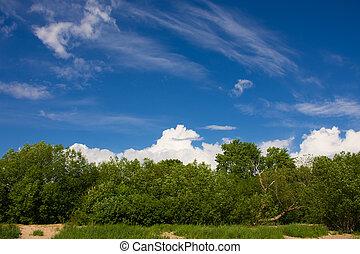 paesaggio, con, alberi verdi, e, sky.