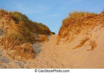 paesaggio, con, dune