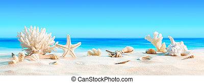 paesaggio, con, seashells