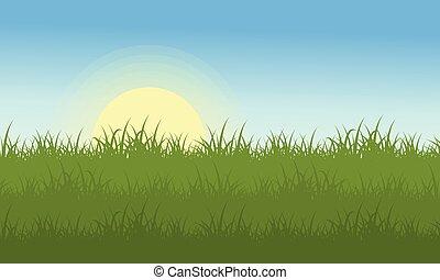 paesaggio, di, erba, a, il, mattina
