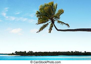 paesaggio, di, un'isola piede, in, aitutaki, laguna, cucini isole