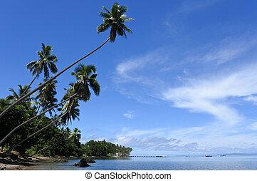 paesaggio, di, uno, spiaggia tropicale, in, vanua, levu, isola, figi