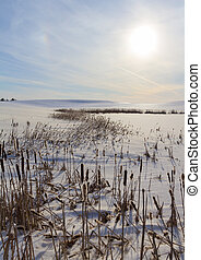 paesaggio inverno, con, canna