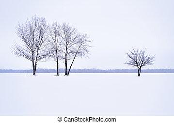 paesaggio inverno, con, solitario, albero, in, foschia,...