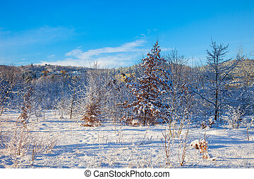 paesaggio inverno, e, albero