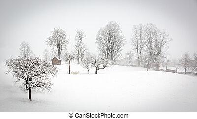 paesaggio inverno, in, alpi, tirolo, wildschonau, austria
