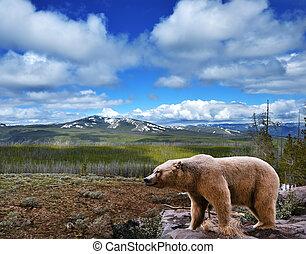 paesaggio montagna, con, orso