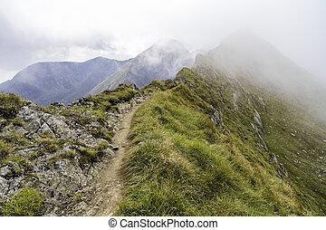 paesaggio montagna, roccioso, estate, picchi