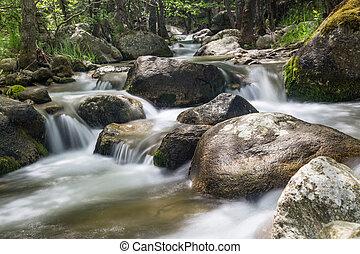 paesaggio natura, con, albero, e, fiume