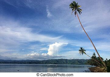 paesaggio tropicale, di, uno, spiaggia, in, vanua, levu, isola, figi
