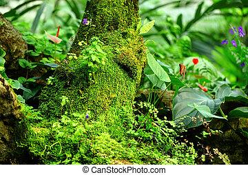 paesaggio tropicale, foresta pluviale