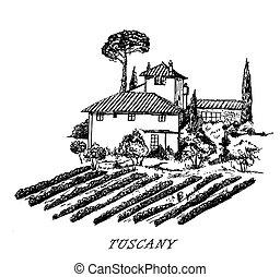 paesaggio., vendemmia, italy., tuscany., vettore, disegno, sketched, rurale