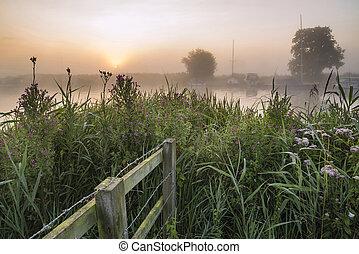 paesaggio, vista, attraverso, campo, a, nebbioso, fiume, thurne, durante, ardendo, alba, in, estate