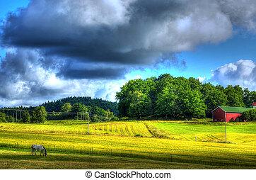 paese, cavallo, paesaggio
