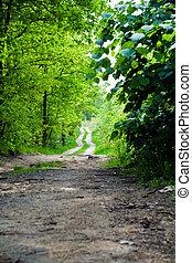 paese, foresta, strada, estate