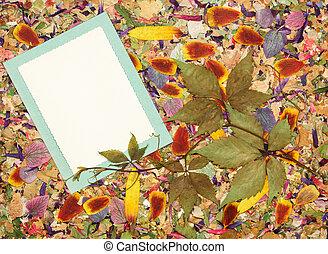 page, fond, consiste, rustique, cassé, album, cadres, fleurs, cadres, fragments, pétales, élément, fleurs, album, style, scrapbooking, corners., photo., leaves., mosaïque