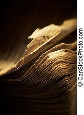 pages., dof., 型, 浅い, -, 端, macro;, 宗教的な本