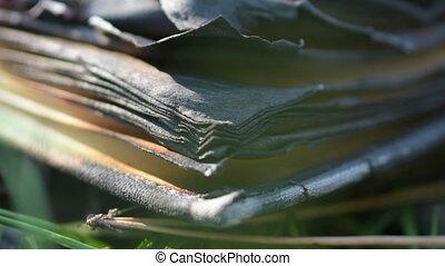 pages., ground., płonący, książka, przez, liście, wiatr