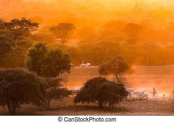 Pagoda landscape at dusk in Bagan