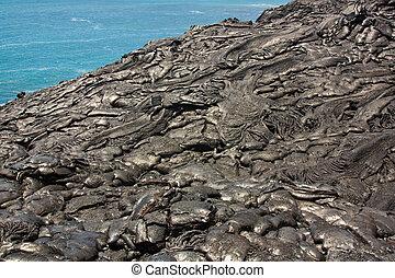 Pahoehoe lava landscape